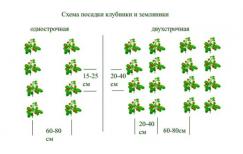 Схема посадки кустов клубники весной и осенью