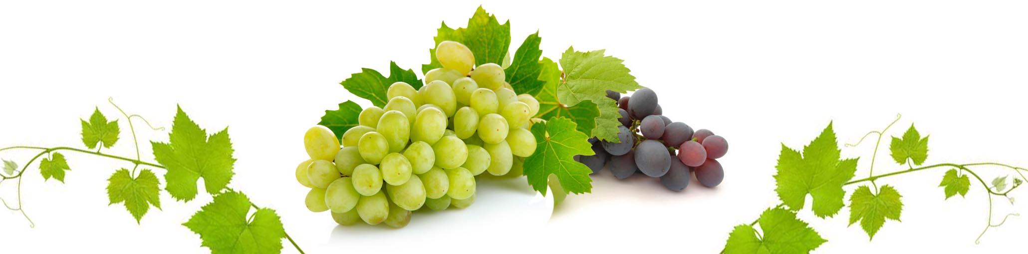 vinograd-